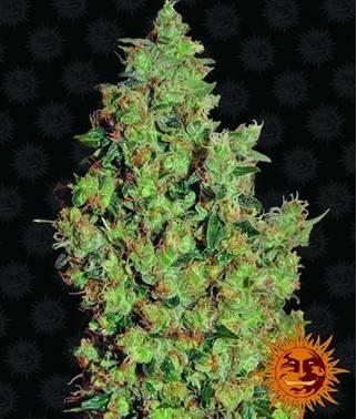 Tangerine Dream - 100%...
