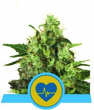 Medical Mass CBD -...