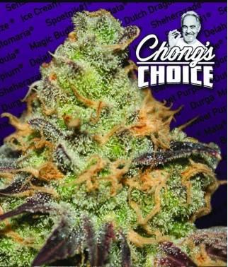 Blue Kush Berry - Cannabis...