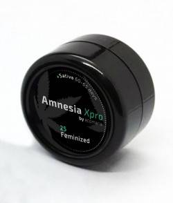 Envase de semillas de la Amnesia Xpro