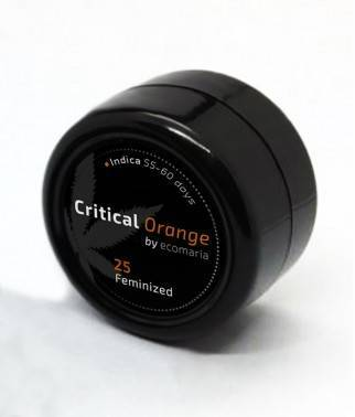 Critical Orange - Semillas...