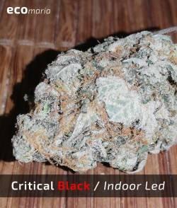 Imagen secundaria del producto Critical Black
