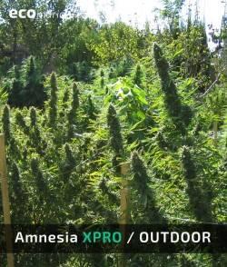 Imagen secundaria del producto Amnesia XPro