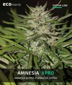 Amnesia XPro - Semillas...