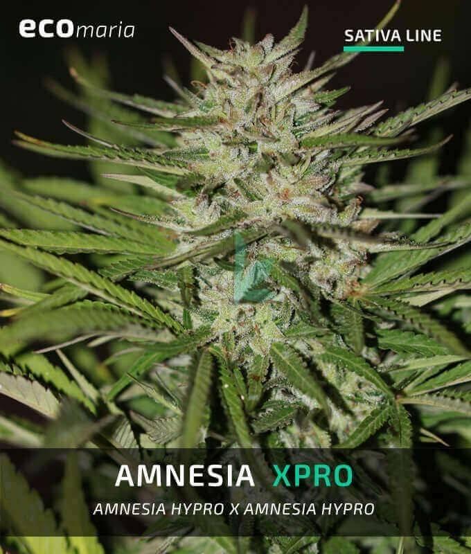 Imagen principal del producto Amnesia XPro