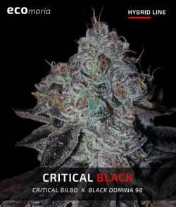 Critical Black - Semillas...