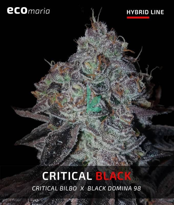 Imagen principal del producto Critical Black