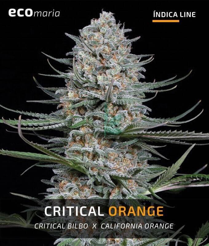 Imagen principal del producto Critical Orange