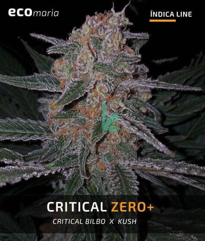 Imagen principal del producto Critical Zero +