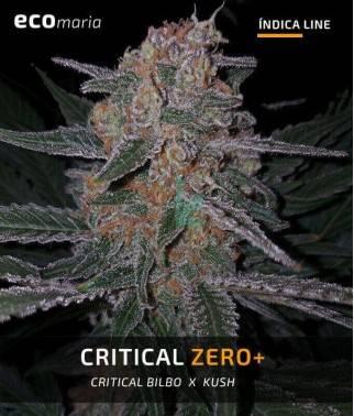 Critical Zero +  - Semillas...