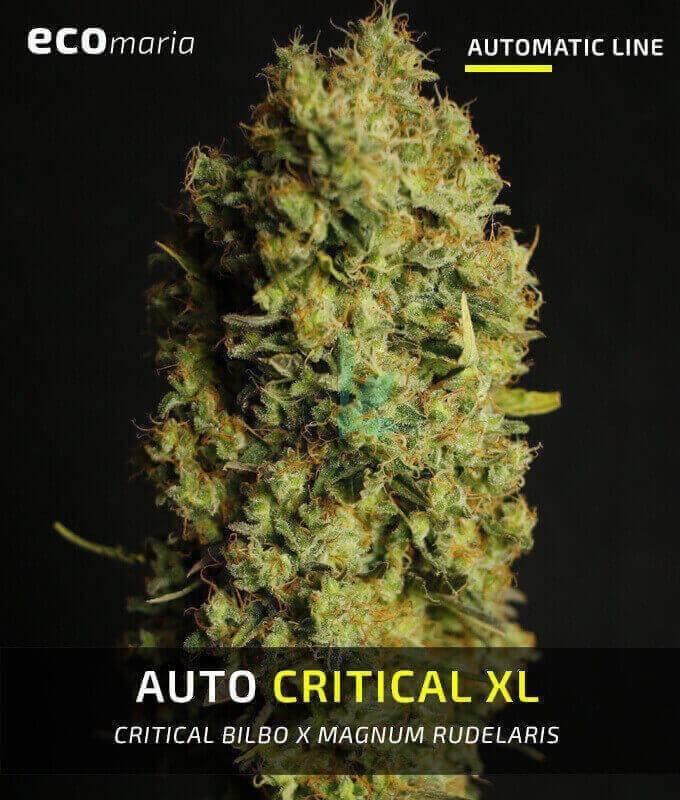 Imagen principal del producto Auto Critical XL