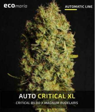 Auto Critical XL -...