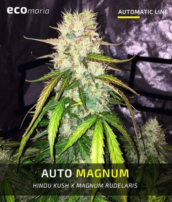 Imagen principal del producto Auto Magnum