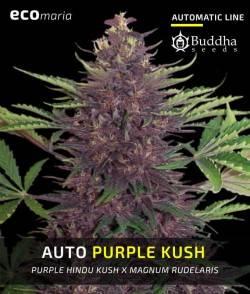 Buddha Purple Kush Auto -...