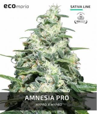 Amnesia Pro -...