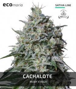 Cachalote - Fotodependiente...