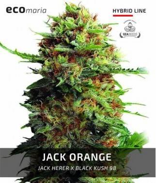 Jack Orange -...