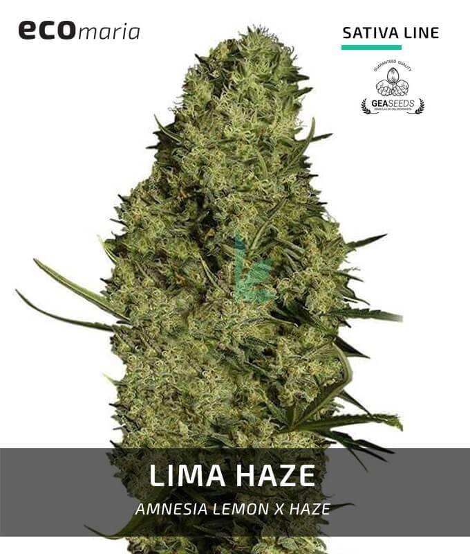 Imagen principal del producto Lima Haze