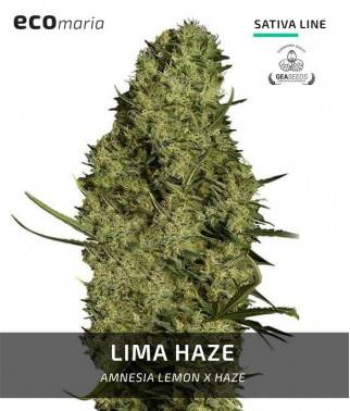 Lima Haze  -...