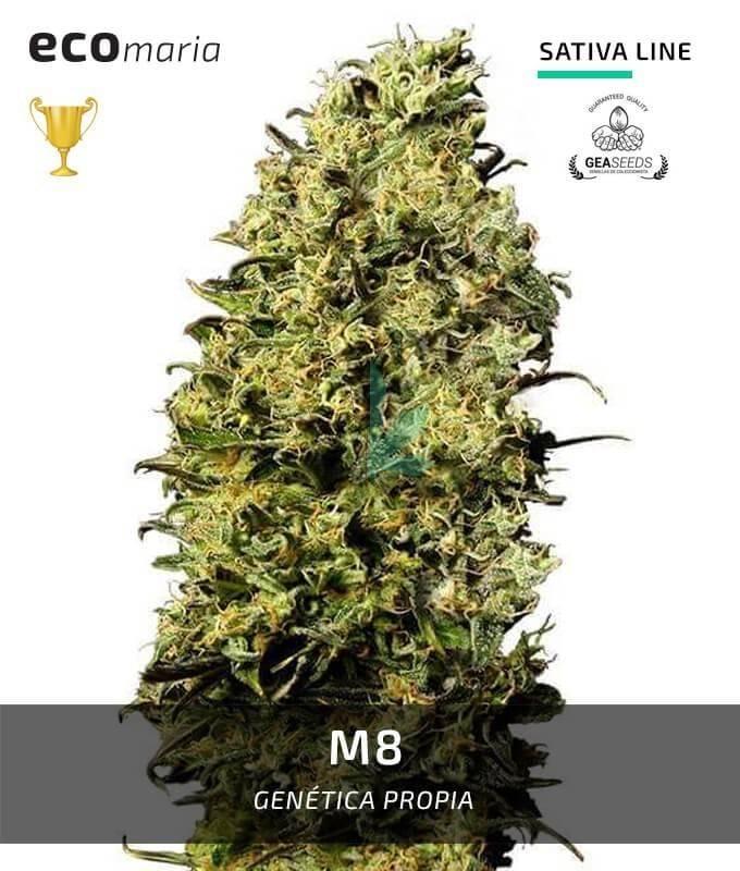 Imagen principal del producto M8