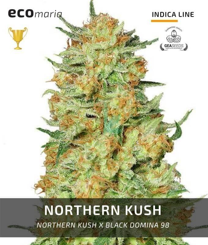 Imagen principal del producto Northern Kush