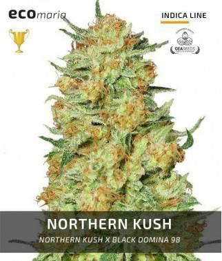 Northern Kush -...