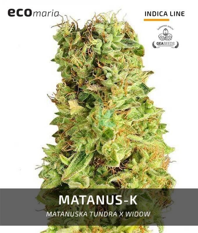 Imagen principal del producto Matanuska