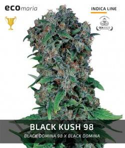 Black Kush 98 -...
