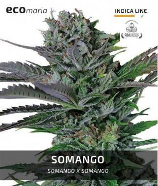 Somango - Fotodependiente y...