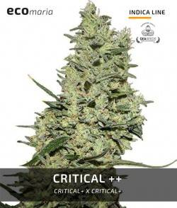 Critical ++ -...