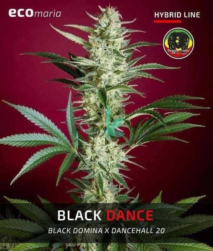 Imagen principal del producto Blackdance