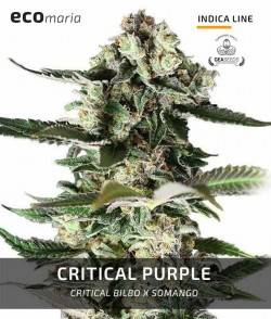 Critical Purple -...