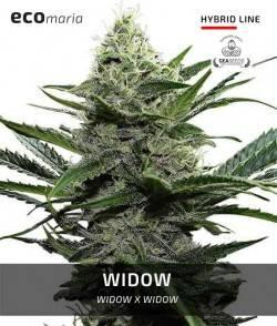 Widow - Fotodependiente y...