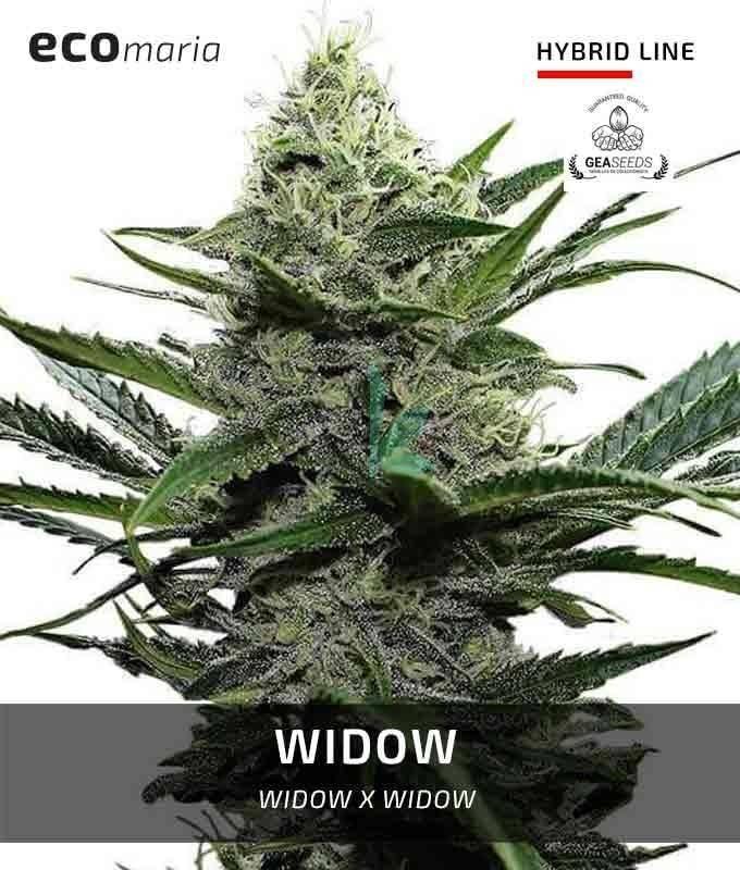 Imagen principal del producto Widow