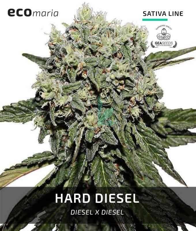 Imagen principal del producto Hard Diesel