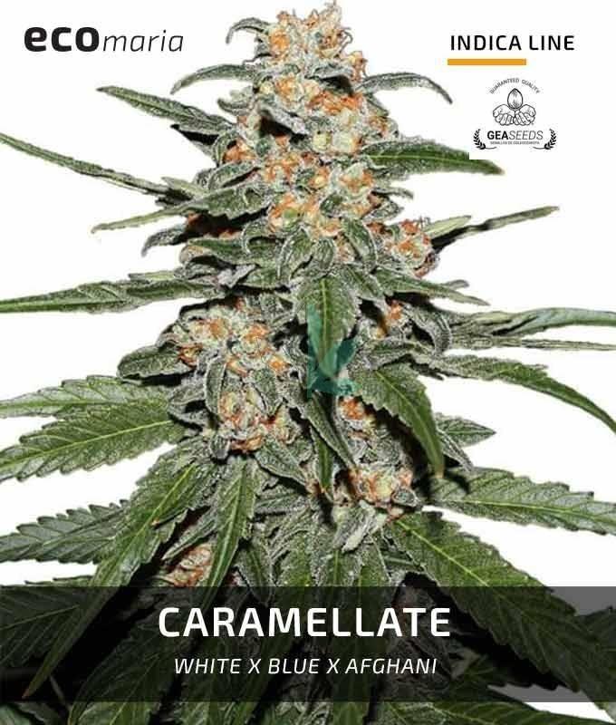 Imagen principal del producto Caramellate
