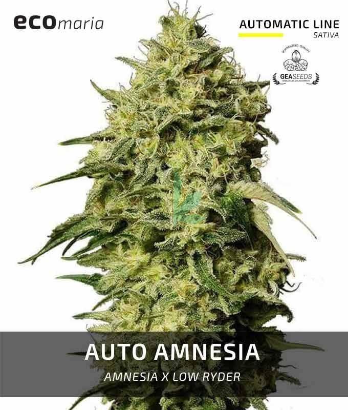 Imagen principal del producto Auto Amnesia