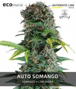 Auto Somango - Semillas...