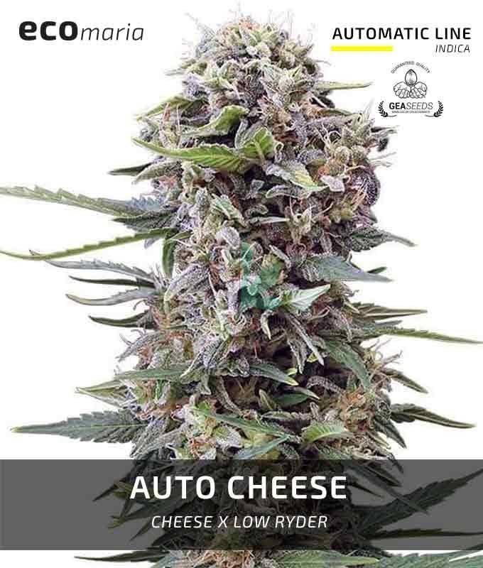 Imagen principal del producto Auto Cheese