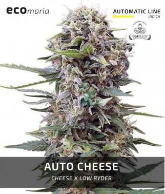 Auto Cheese - Semillas...