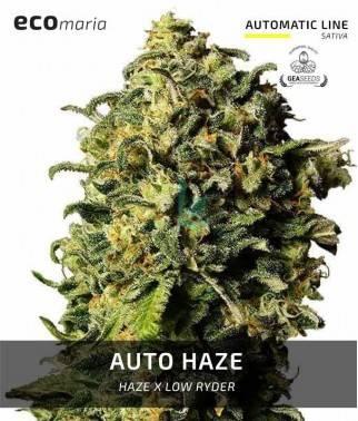 Auto Haze - Semillas...