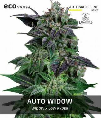 Auto Widow - Semillas...