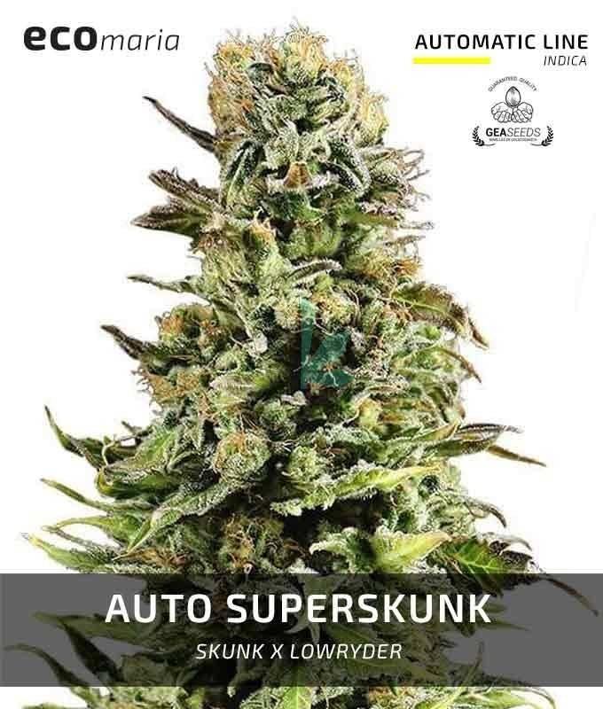Imagen principal del producto Auto Super Skunk