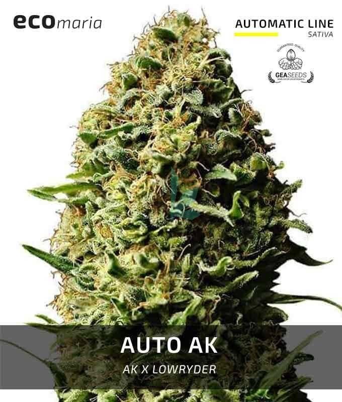 Imagen principal del producto Auto Ak