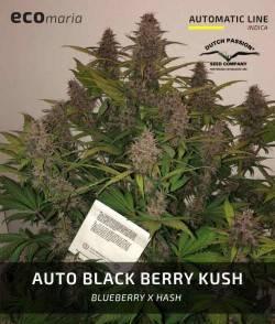 Auto Blackberry Kush -...