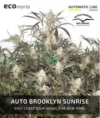 Auto Brooklyn Sunrise -...