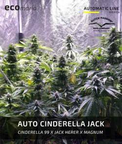 Auto Cinderella Jack -...