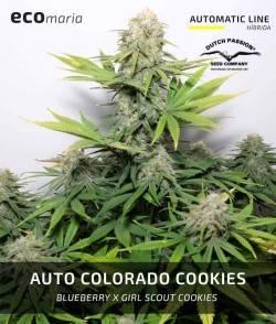 Auto Colorado Cookies -...