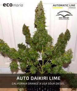 Auto Daiquiri Lime -...
