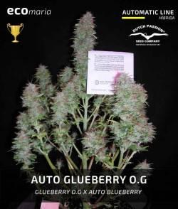 Auto Glueberry O.G. -...